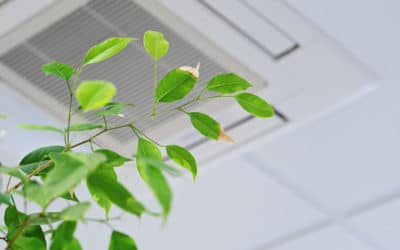 Improving Your Home's Air Quality